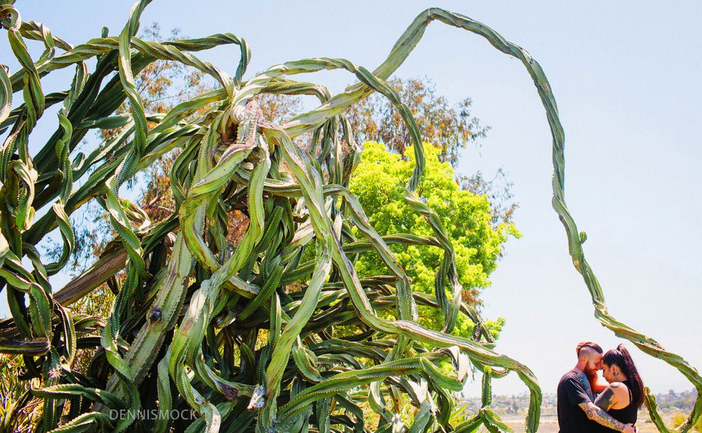 Modern couple shoot in the Balboa park catcus garden. Credit Dennis Mock Photographer based in San Diego