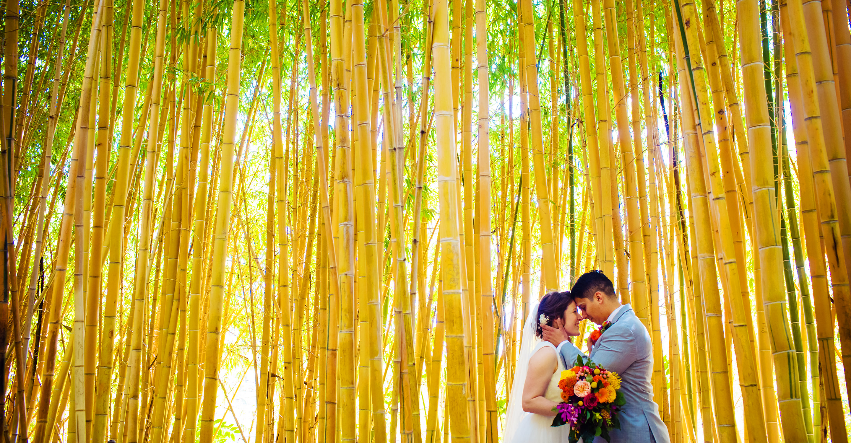 San Diego couple gets married at the San Diego safari park among the bamboo trees photo by Dennis mock wedding photographer